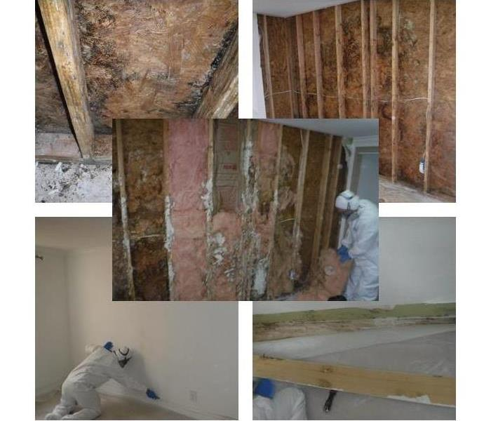 Mold Remediation Got Visible Signs of Mold Growth in the Bay Area!?!