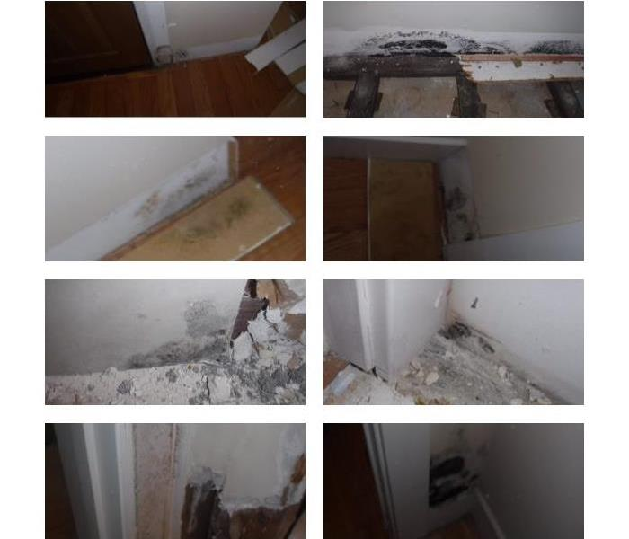 Mold Remediation San Mateo County Residents: Mold Issues